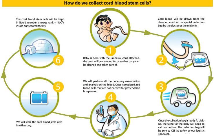 Cord Blood Banking Cost >> Bookofjoe Behindthemedspeak Free Cord Blood Banking