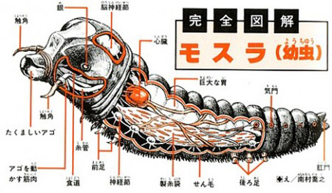 Anatomy_mothra