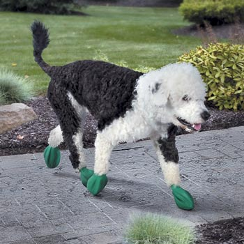 Dog-boots-359867s