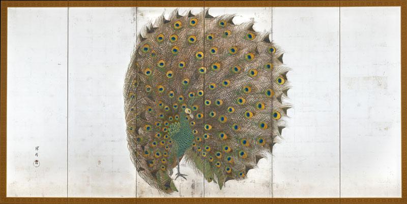 Et_peacock_full