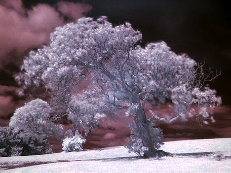 Infrared-tree-photo