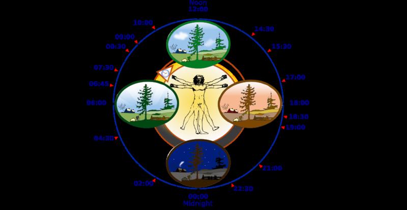 1000px-Biological_clock_human.svg