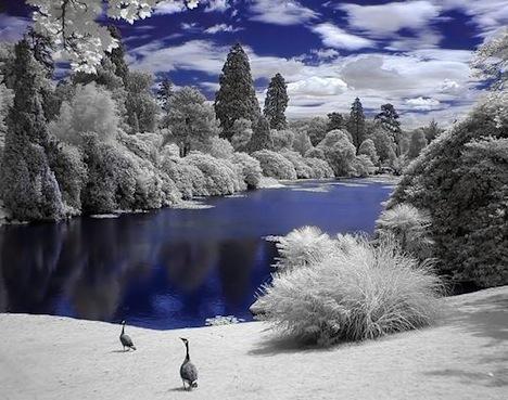 Infrared-tree-white