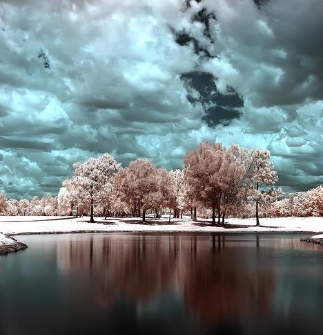 Infrared-tree-lake-2