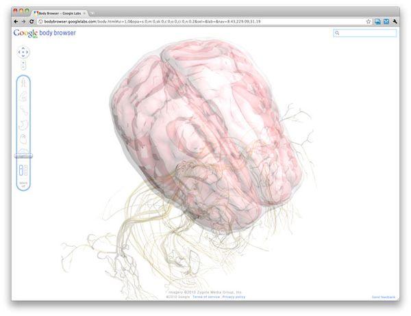 Bodybrowser-brain