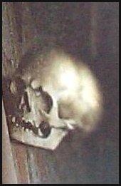 Skull-detail