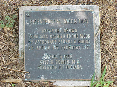 Indiana-Moon-Tree