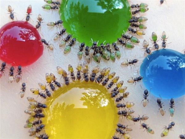 Colorful+ants_BonjourLife.com2