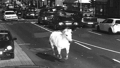 Horse_on_speed_camera_europics