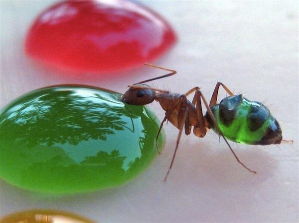 Colorful+ants_BonjourLife.com1
