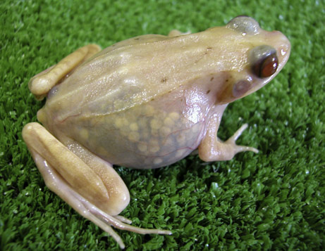 070928-frog-picture_big