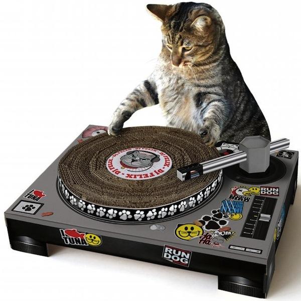 Catscratch-with-cat1