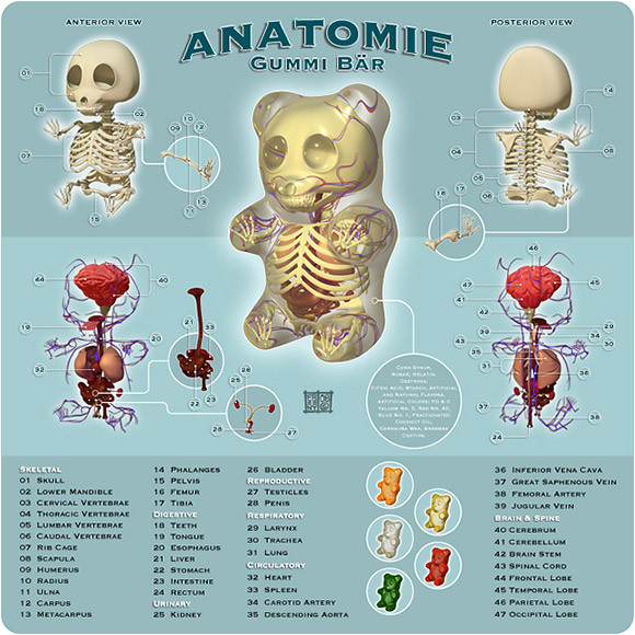 Gummi-Bear-Anatomy-Toys-are-coming-3