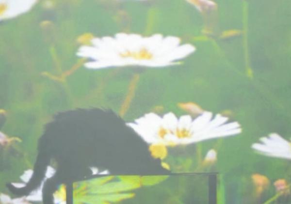 Screen Shot 2013-06-10 at 6.23.45 PM
