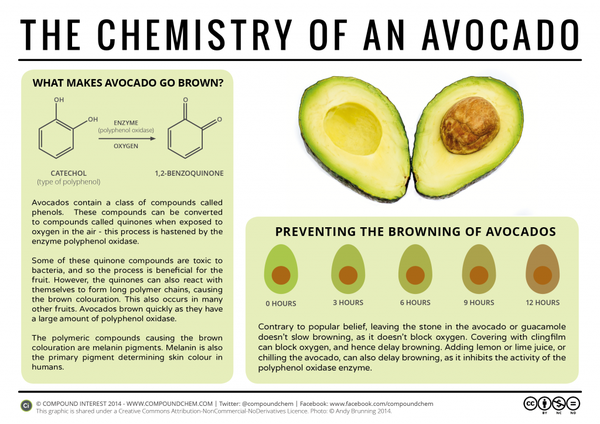 The-Chemistry-of-Avocado-1024x724