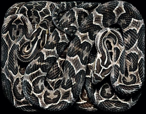 Snake-03-S-1200x945