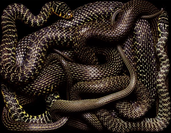 Snake-09-1-1200x934