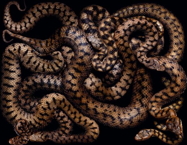 Snake-14-1-1200x936
