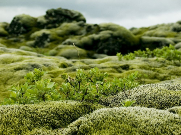 Mossy-lava-fields-iceland-32