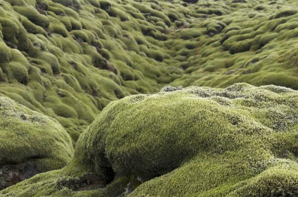 Mossy-lava-fields-iceland-82