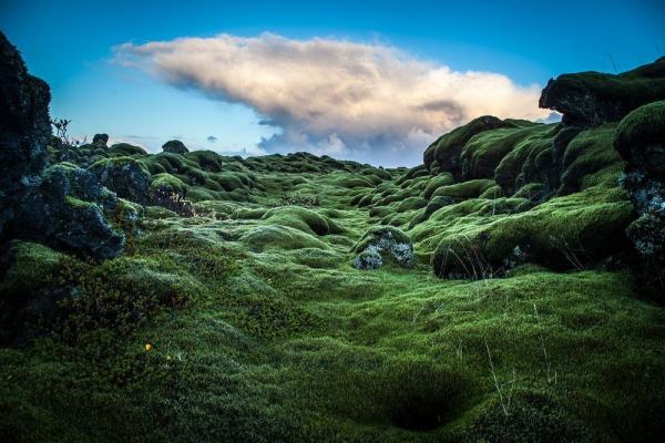 Mossy-lava-fields-iceland-102