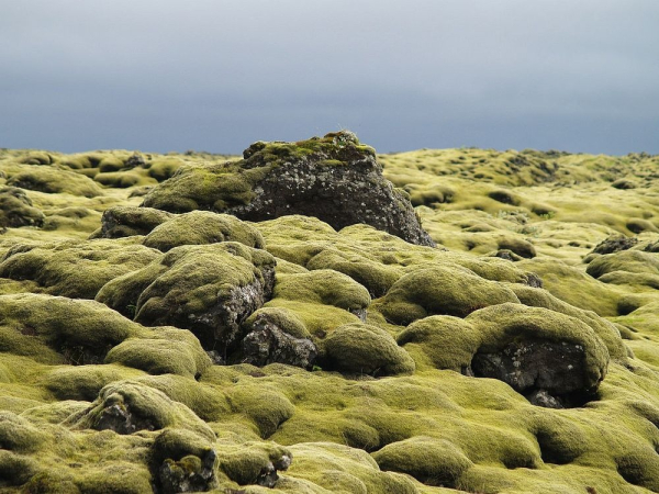 Mossy-lava-fields-iceland-56