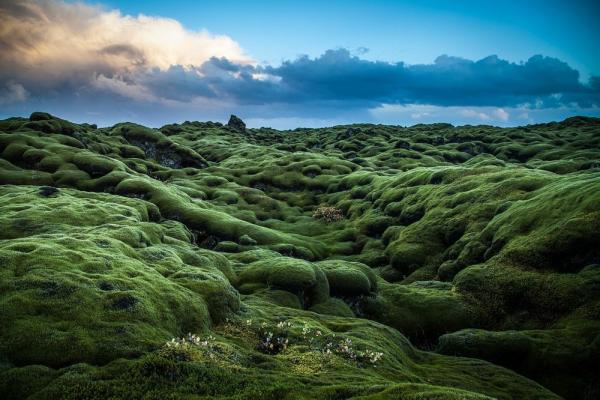 Mossy-lava-fields-iceland-99