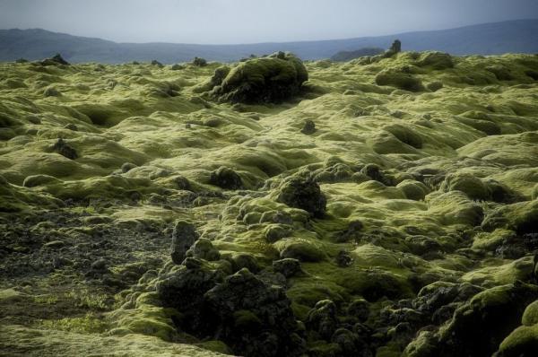 Mossy-lava-fields-iceland-42