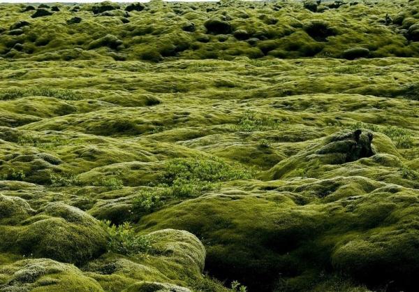Mossy-lava-fields-iceland-22