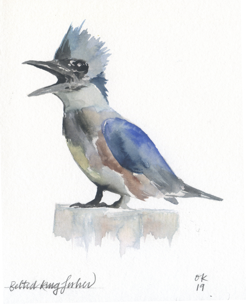 Kingfisher_OK_WEB_2880_FINAL-1600x1981