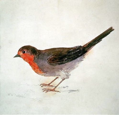Robin -From-The-Farnley-Book-Of-Birds -C.1816