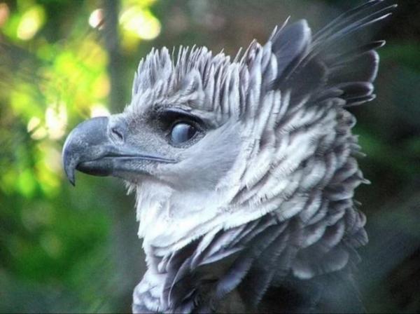 Eagle copy 2