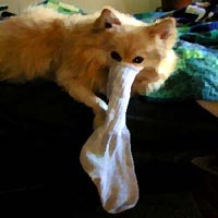 Cat_smelling_sock_for_flautist
