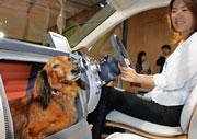 Inside2dogcar
